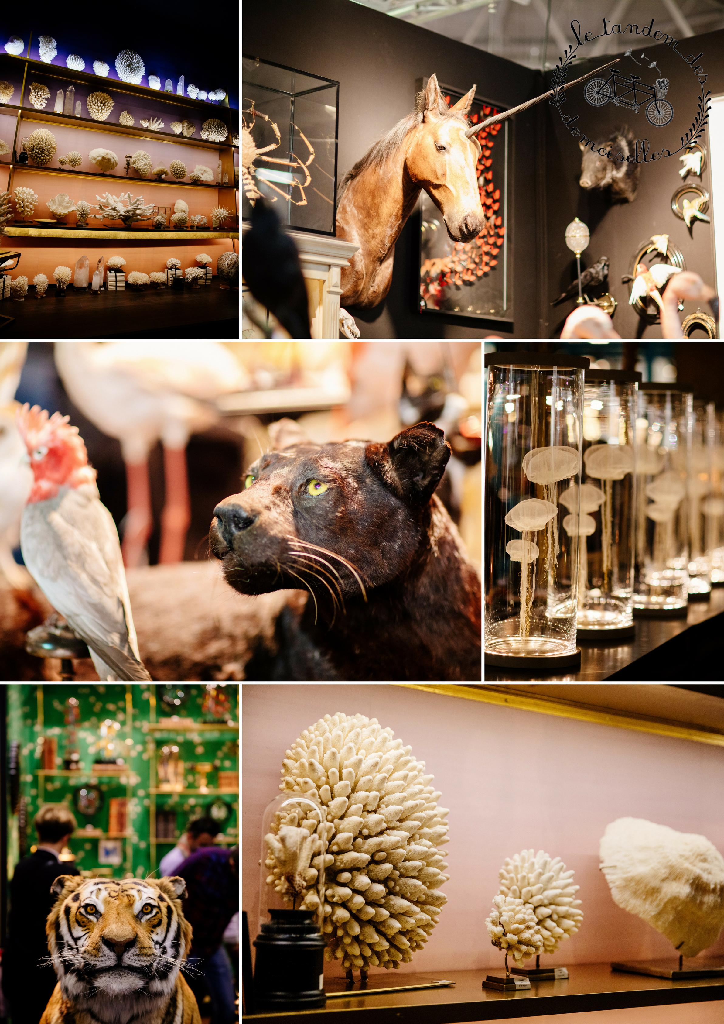 décoration vert et doré - salon Maison et Objets - cabinet de curiosités